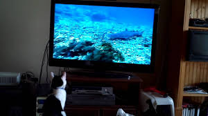 bell tv hd channels guide
